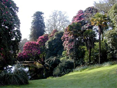 A view of one of The Lost Gardens of  Heligan's arboretums across a lawn.