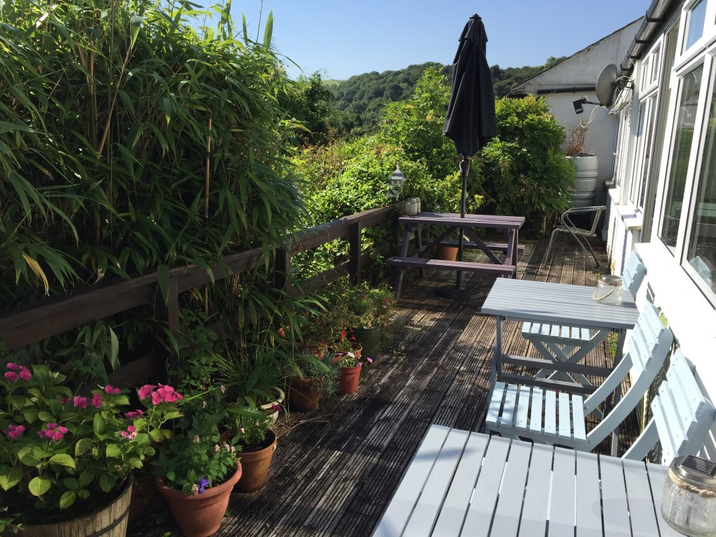 A sunny balcony with pot plants and bamboo, overlooking Polperro valley.
